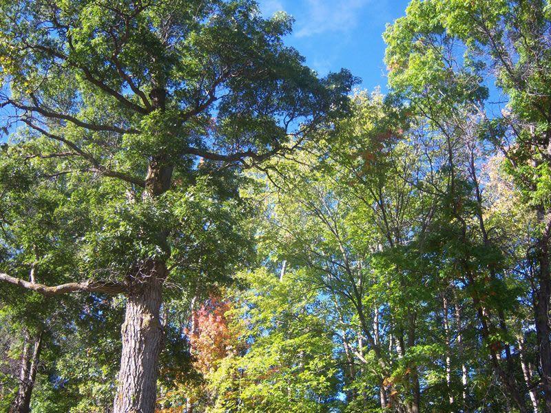 outside-trees-sky2