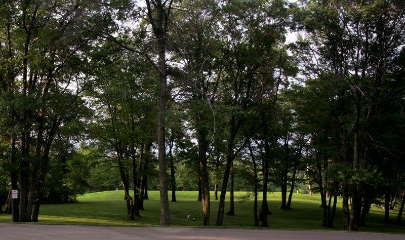 outside-trees