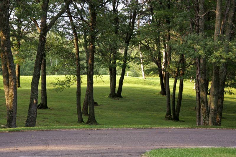 outside-trees2